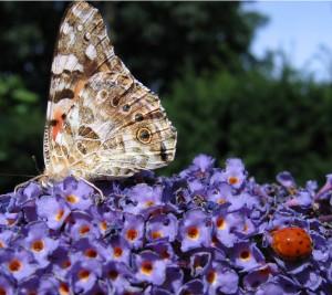 Vlinder en lieveheersbeest